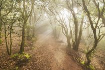 Misty forest in Anaga mountains, Tenerife, Canary island, Spain — Stock Photo