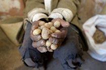 Primo piano delle mani di contadino che tengono patate — Foto stock