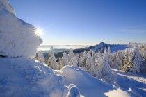 Германия, Бавария, Баварский лес зимой — стоковое фото