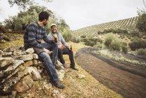 Двоє чоловіків, що мають перерву в маслиновий Гай — стокове фото