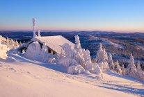 Allemagne, Bavière, Forêt bavaroise en hiver, Grand Arbre, Cabane Zwiesel en soirée — Photo de stock