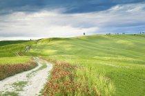 Blick auf Wiese mit grünem Rasen und Blumen tagsüber — Stockfoto