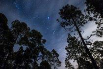 Испания, Тенерифе, звездное небо в Национальном парке Тейде — стоковое фото