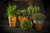Vista del primo piano di cinque diverse piante in vaso su superficie di legno — Foto stock