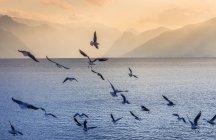 Autriche, Salzkammergut, Gmunden, volée d'oiseaux à Traunsee — Photo de stock