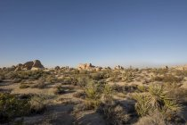 Estados Unidos, California, desierto en el Parque Nacional Joshua Tree - foto de stock