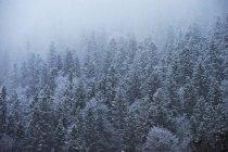 Vue des arbres dans la neige pendant la journée — Photo de stock