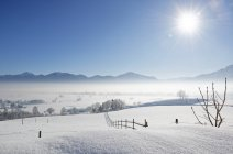 Allemagne, vallée de Loisach près de Grossweil, brouillard du matin sur Loisachmoor — Photo de stock