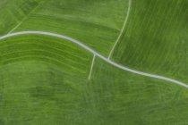 Вид на зеленое травяное поле днем — стоковое фото