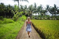 Indonesien, Java, Frau läuft auf Feldweg durch Reisfelder — Stockfoto