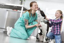 Dog in veterinary clinic shaking hands and licking face of veterinarian assistant — Stock Photo