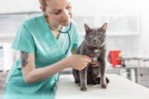 Veterinarian assistant examining cat in veterinary clinic — Stock Photo