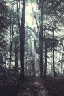 Bosque en el nublado día de otoño en contraluz, Wuppertal, Alemania - foto de stock
