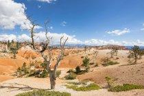 Соединенные Штаты Америки, Юта, Брайс-Каньон Национальный парк, хулиганы и голые деревья на Navajo Loop Trail — стоковое фото