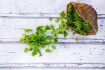 Органічні взимку Портулак — стокове фото