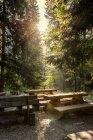 Tchéquie, Hradec Kralove, aire de repos et de forêt dans le Parc National des monts géants — Photo de stock