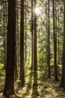 Czechia, Hradec Kralove, forest in Giant Mountains National Park — Stock Photo