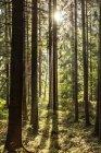 Чехії, Градец Кралове, ліс у національному парку гори гігант — стокове фото