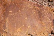 Dipinti antichi con gli animali sulla roccia — Foto stock