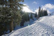 Pente de la montagne enneigée et les arbres à rétro-éclairage — Photo de stock