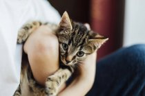 Cute tortoiseshell kitten being cuddled kid — Stock Photo