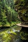 Денного зору туристичних trail Kamnitz ущелині — стокове фото