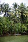 Indonésia, Java, vegetação tropical à beira-rio com barcos tradicionais — Fotografia de Stock