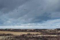 Дания, Скаген, дюна пейзаж в дневное время — стоковое фото
