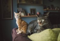 Ginger kitten and tabby cat on top of couch — Stock Photo