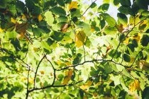 Autumnal leaves at sunlight, full frame — Stock Photo