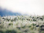 Blick auf gefrorenen Rasen, unscharf — Stockfoto