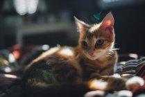 Ginger cat lying on bed in sunlight — Stock Photo