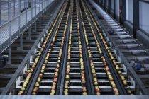 Cidade do Cabo, África do Sul, processo de produção da Apple através da vista superior da correia transportadora — Fotografia de Stock