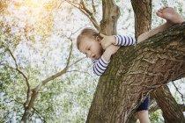 Portrait de petite fille grimper sur l'arbre — Photo de stock