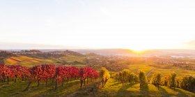 Alemania, Stuttgart Rotenberg, viñedos otoñales - foto de stock