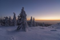 Germany, Lower Saxony, Harz National Park, Wolfswarte in winter at twilight — Stock Photo
