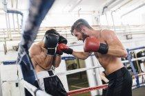 Два кавказских боксера сражаются на ринге — стоковое фото