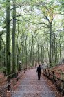 Poland, Misdroy, man walking in beech forest — Stock Photo