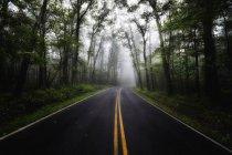 USA, Virginia, svuotare Blue Ridge Parkway a nebbia — Foto stock