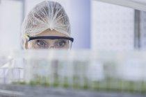 Mujer en laboratorio usando ropa protectora mirando muestras de planta - foto de stock