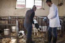 Vet and female farmer looking at calves on farm — Stock Photo