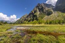 Áustria, Caríntia, Hohe Tauern Graden pastar no Graden vale — Fotografia de Stock