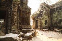 Камбоджа, Ангкор, Ta Prohm храму, Tomb Raider фільмів розташування — стокове фото
