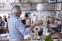 Учитель с анатомической моделью и ученики в классе — стоковое фото