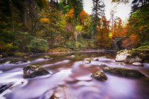 Royaume-Uni, Écosse, Dunkeld, arbres d'automne à la rivière Braan — Photo de stock