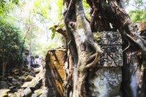 Cambodge, Angkor, Temple Beng Mealea ruiné — Photo de stock