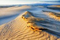 Dune à Delta del Ebro, Catalogne — Photo de stock