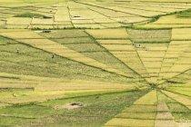 Indonesia, Nusa Tenggara Timur, ricefields — стокове фото