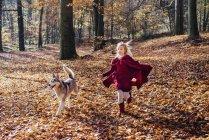 Красная шапочка, девушка в лесу с хаски — стоковое фото