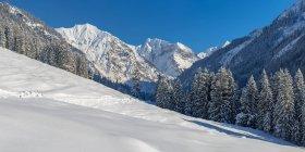 Германия, Бавария, Долина Oy в зимний период с деревьев на склонах — стоковое фото